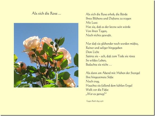 Als sich die Rose...