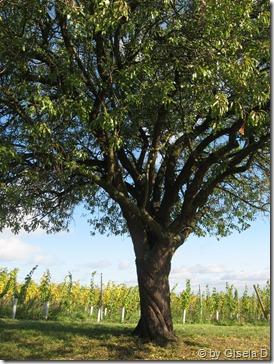 7 Mandelbaum