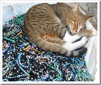 Side 25 - Im Schmuck schlafende Katze