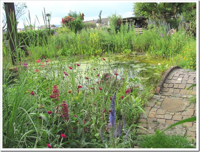 Naturteich im Garten