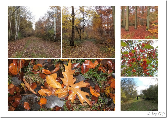 Waldspaziergang_collage
